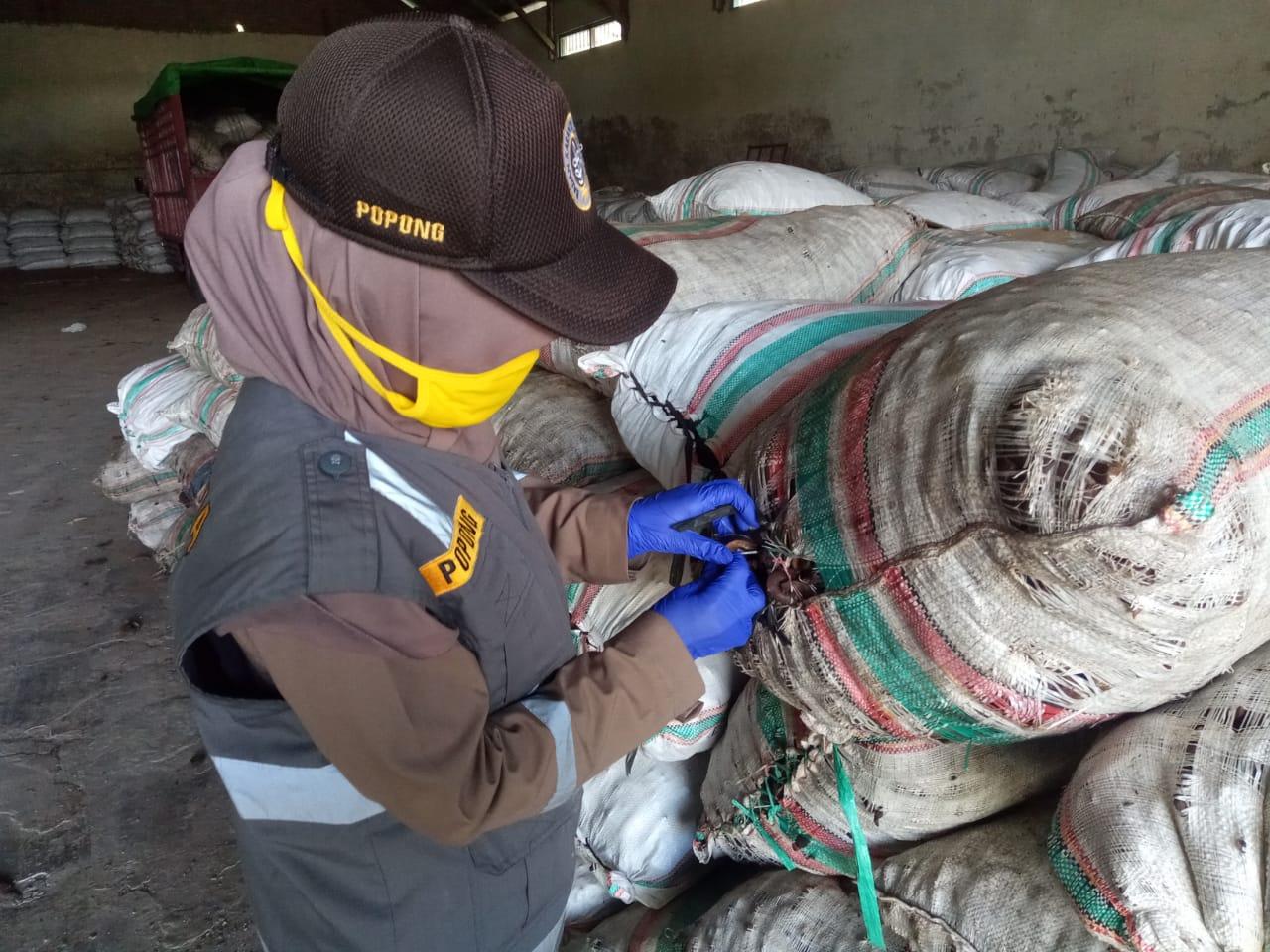 Kopra, Potensi Ekspor Maluku Utara